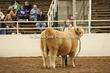 20LC-CattleHS-1559.jpg