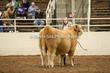 20LC-CattleHS-1560.jpg