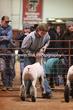 20LC-Lambs-2163.jpg