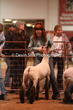 20LC-Lambs-2164.jpg