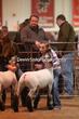 20LC-Lambs-2166.jpg
