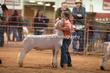 20LC-Lambs-2490.jpg
