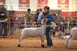 20LC-Lambs-2491.jpg
