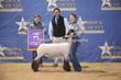 20LC-Lambs-2536.jpg