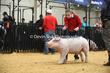 20LC-SwineHS-2699.jpg