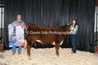 20NC-CattleBD-0211(1).jpg