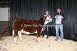 20NC-CattleBD-0216(1).jpg