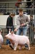 20NC-SwineHS-1007.jpg