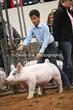 20NC-SwineHS-1109.jpg