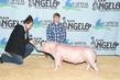 20SA-SwineBD2-7642.jpg