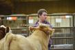 20SC-Cattle-4807.jpg