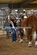 20SC-Cattle-4929.jpg