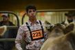 20SC-Cattle-5070.jpg