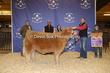 20SC-Cattle-6470.jpg