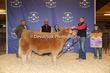 20SC-Cattle-6471.jpg