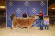 20SC-Cattle-6475.jpg