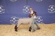 20SC-Lamb-5913.jpg