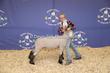 20SC-Lamb-5916.jpg