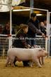 20SC-SwineDriveHS-9037.jpg