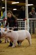 20SC-SwineDriveHS-9040.jpg