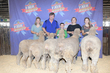 20WT-BreedingSheep-2469.jpg