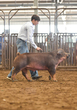 20WT-SwineHS-0798.jpg