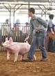 20WT-SwineHS-0998.jpg