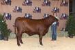 21BC-CattleBD-0902(1).jpg