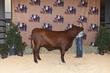 21BC-CattleBD-0903(1).jpg