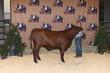 21BC-CattleBD-0904.jpg