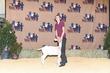21BC-GoatBD-0141.jpg