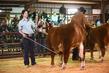 21GC-CattleHS-2235.jpg