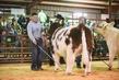21GC-CattleHS-2306.jpg