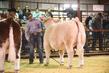 21GC-CattleHS-2308.jpg