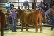 21GC-CattleHS-2464.jpg