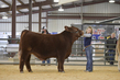 21GS- Steer HS - Champion Drive-4533.jpg