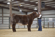 21GS- Steer HS - Champion Drive-4536.jpg