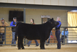 21GS- Steer HS - Champion Drive-4537.jpg