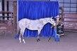 21KK-HorseBD-2021.jpg