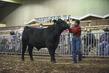 21KKC- Breeding Cattle HS-3800.jpg