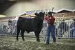 21KKC- Breeding Cattle HS-3801.jpg