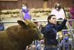 21KKC- Breeding Cattle HS-3802.jpg