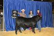 21KKC- Cattle Backdrops-5713.jpg