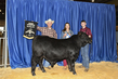 21KKC- Cattle Backdrops-5714.jpg