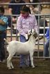 21KKC- Market Goat HS-2100.jpg