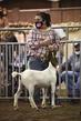 21KKC- Market Goat HS-2101.jpg