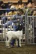 21KKC- Market Goat HS-2102.jpg