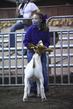 21KKC- Market Goat Showmanship HS-2520(1).jpg
