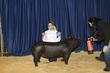 21KKC- Market Hog Backdrops-5025.jpg