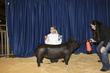 21KKC- Market Hog Backdrops-5026(1).jpg